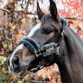 Kentucky Horsewear Nylon Sheepskin Halter