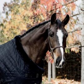 Kentucky Horsewear Limited Edition Black/Black Show Rug